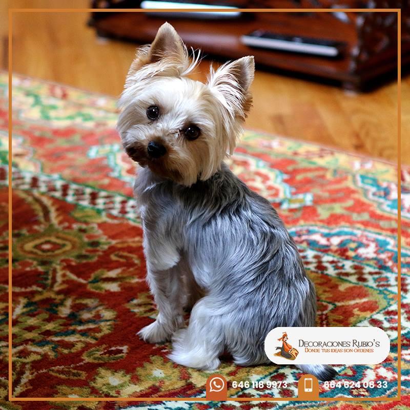 Diciembre: la mejor época para poner alfombra en tu casa ...